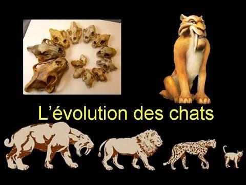 Stop, Science : l'évolution des chats