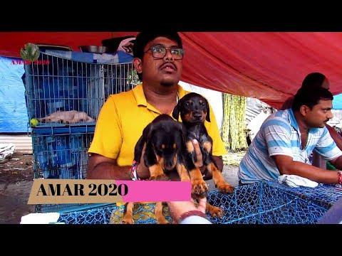 CUTE DOG PUPPY SELLER AT GALIFF STREET PET MARKET KOLKATA INDIA | 18TH AUGUST 2019 VISIT