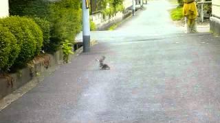 車で走行中、目の前に鳥が3羽落下してきた。危うくひきそうになったが...