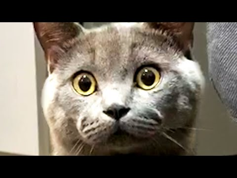 The Best Cute and Funny Cat Videos to Start August 2020!