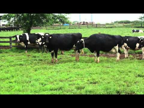 Ken & Ben Smith Cool Lawn Farms Customer Testimonial