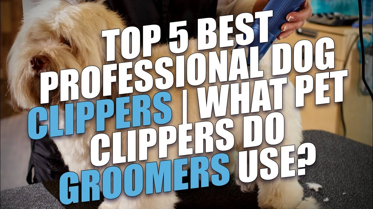 Top 5 best professional dog clippers what pet clippers do top 5 best professional dog clippers what pet clippers do groomers use solutioingenieria Choice Image