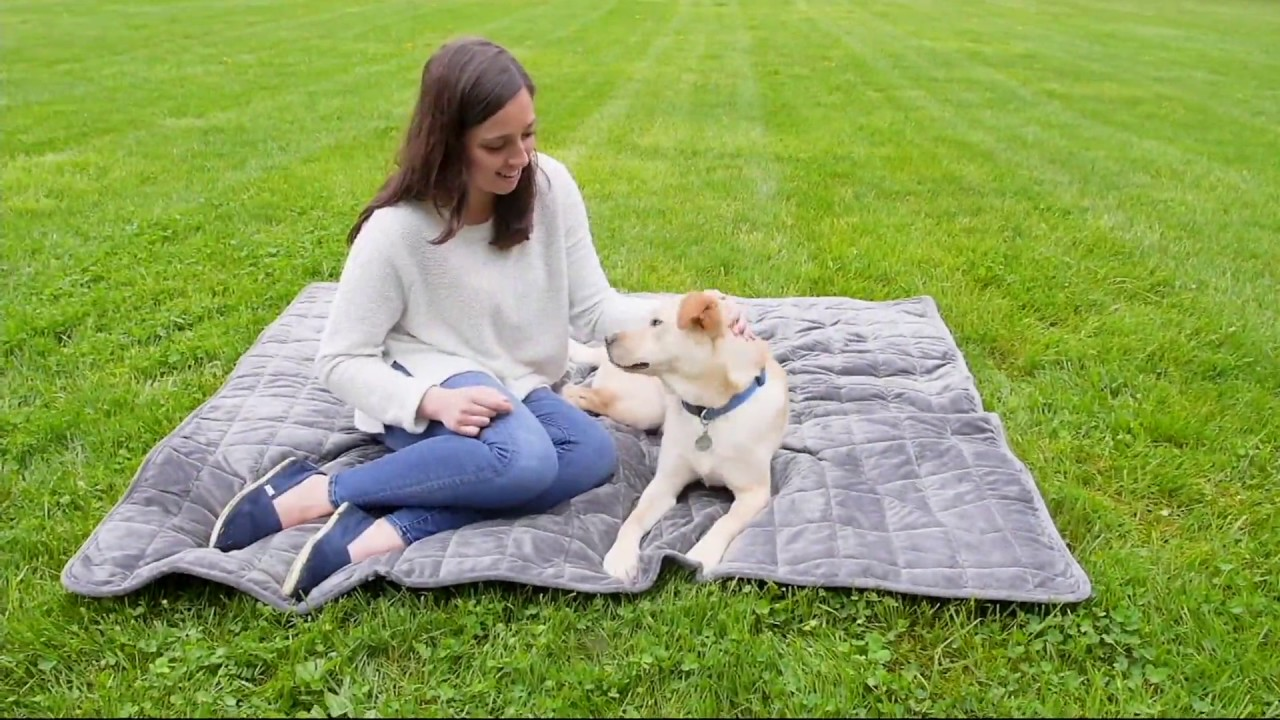 sure fit travel nonslip auto interior pet protector on qvc youtube
