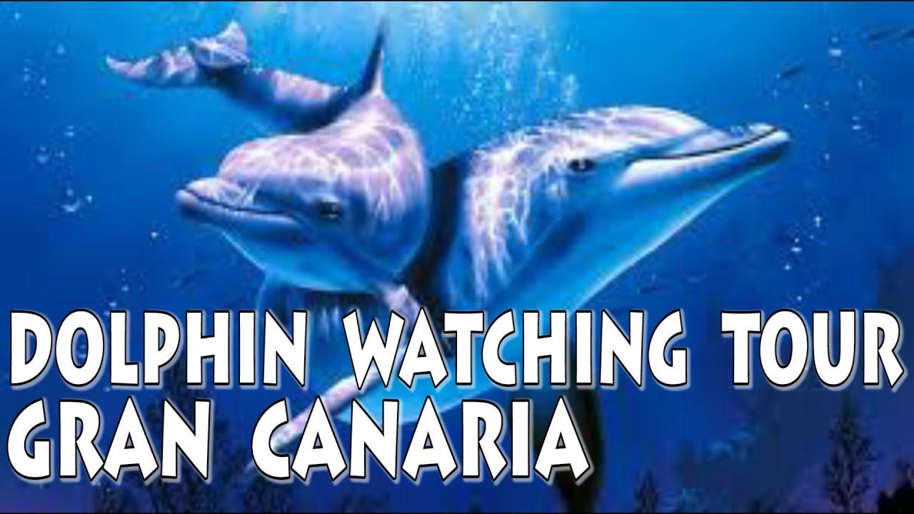 gran canaria delfin tour