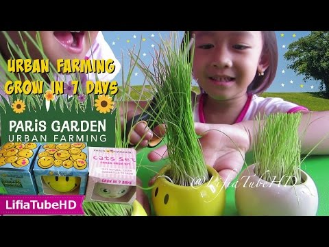 Mainan anak DIY - paris garden grass - paris garden urban farming Italian grass seeds @LifiaTubeHD