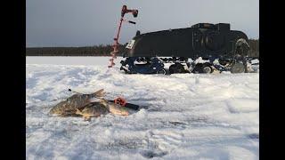 На буксировщике в залив Закормил лунки и такой результат Братское водохранилище Рыбалка