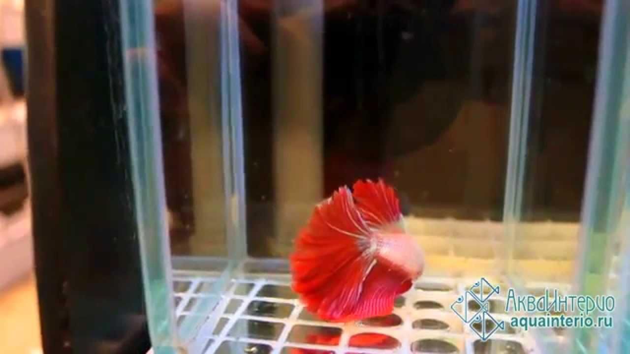Riba žena izlazi s muškarcem akvarijom