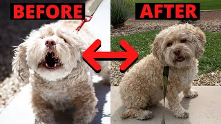 Rescue Dog Training  Before and After a 28 Day Board and Train