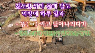 진도견 짱가 문패 달고 먹방에 하루 일과!(125회)#…