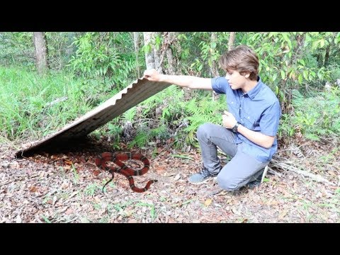 How To Find Snakes In AUSTRALIA! HD
