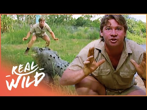 Crocs Down Under [Steve Irwin Documentary] | Wild Things