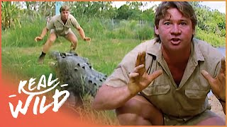 Steve Irwin Face Crocodiles Down Under (Wildlife Documentary) | Crocs Down Under | Real Wild