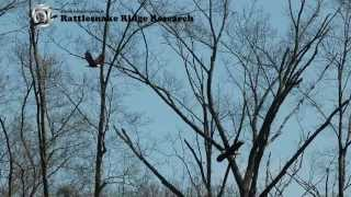 Manassas Airport Eagles Incident