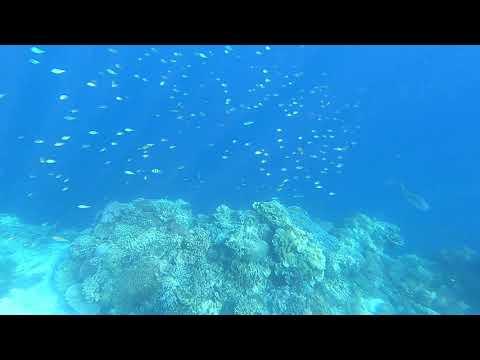 Balicasag Marine Eco Reserve, Panglao, Bohol