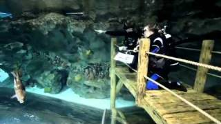Children's Shark Dives At Blue Planet Aquarium.mov