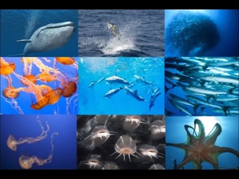 Image of: Hearts 15 Amazing Facts About Sea Life Youtube 15 Amazing Facts About Sea Life Youtube