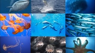 15 Amazing Facts About Sea Life