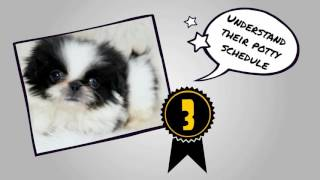 How To Potty Train a Pekignese Puppy FAST | Housebreaking Pekignese Puppy In 7 Days