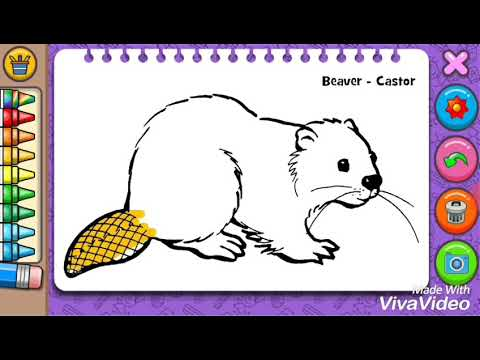 Beaver Castor Colouring Games Yep Yeni Hayvan Boyama Oyunlari