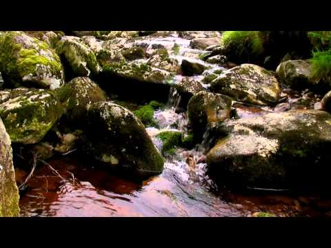 Mountain Stream with Sounds of Running Water No Music