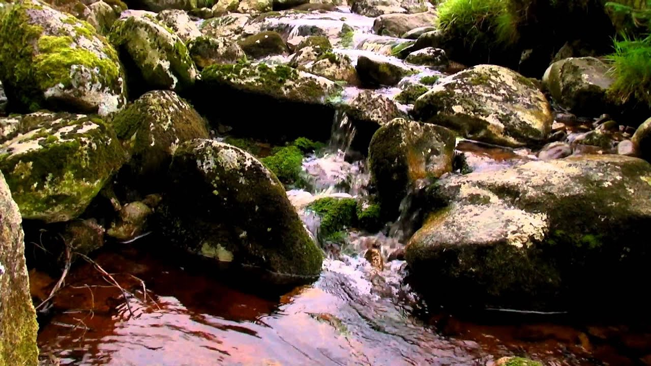 Animated Jungle Wallpaper Mountain Stream With Sounds Of Running Water No Music