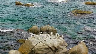 ⊙ 65년만에 개방된 속초 외옹치바다향기로-고화질 제작
