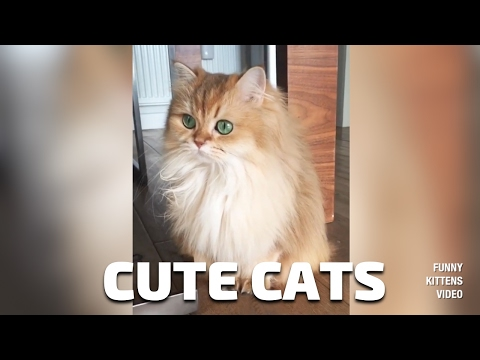 The best of videos funny cats compilations 2017 #5