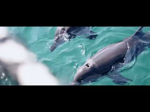 help-support-our-dolphins-and-sea-lions