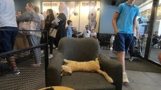 Ginger cat is living inside the cafe