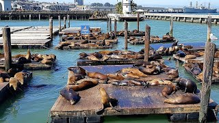 Best Tourist Attractions you MUST SEE in Oakland, United States | 2019