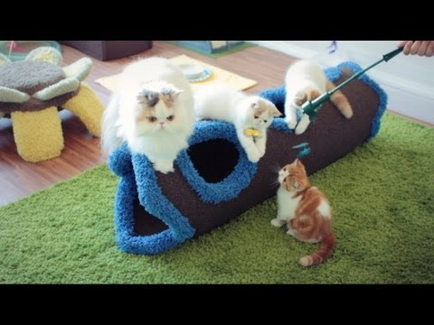 Kitty Marshy Visits Baby Brothers