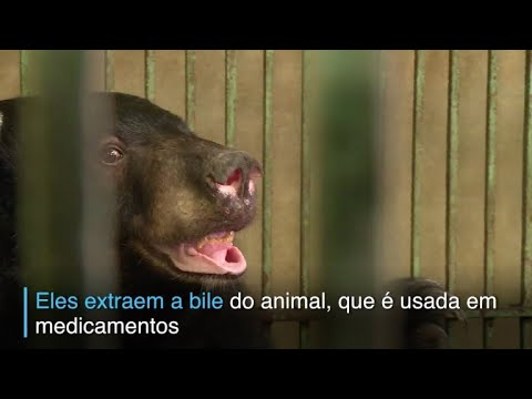 afpbr: Ursos resgatados