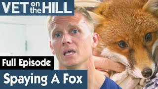 🦊 Fox Needs To Be Spayed Before Returning | FULL EPISODE | S02E18 | Vet On The Hill