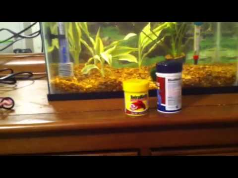 How to have a healthy Betta fish