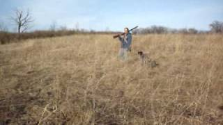 German Wirehaired Pointer Master Hunter Demo
