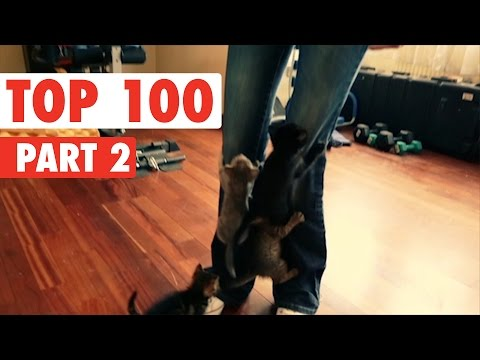 Top 100 Best of The Year 2016 Part 2