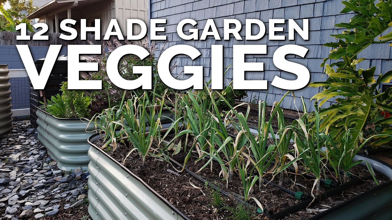 12 Perfect Vegetables To Grow In A Shady Garden Space Youtube