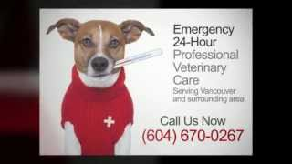 24Hr Emergency Vet Vancouver -Call (604) 670-0267