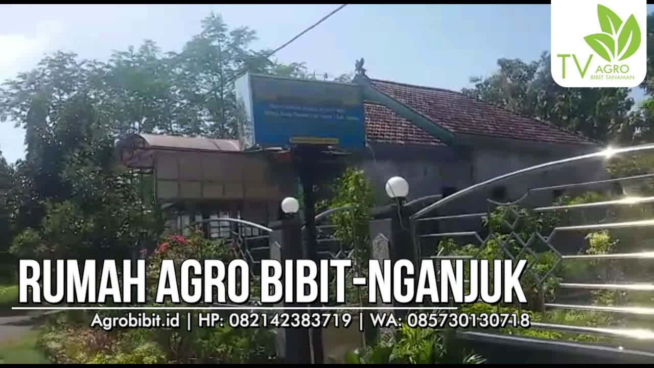 Rumah Agro Bibit - Nganjuk - YouTube