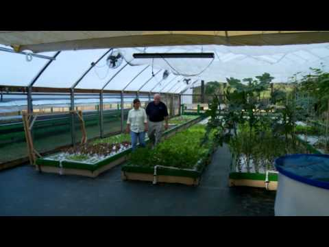 Aquaponics: Go Commercial? Start Small