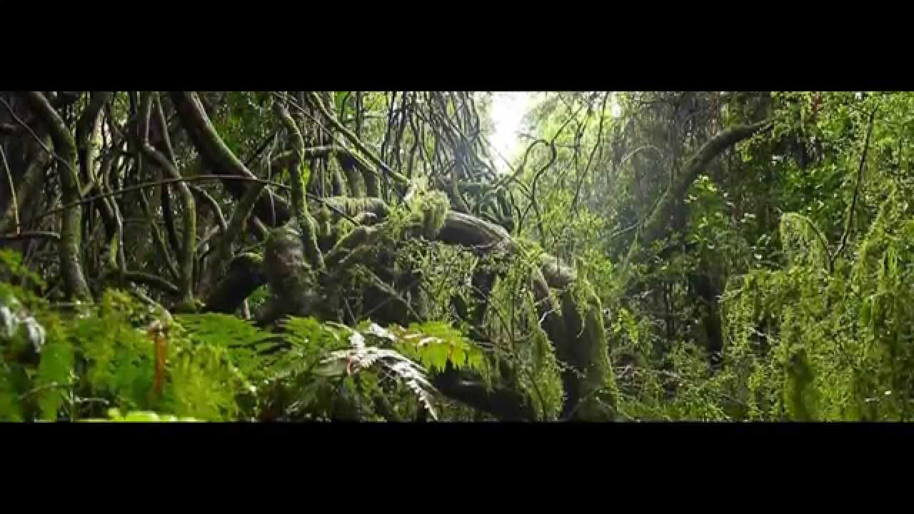 canon 60d video test sample rainforest youtube