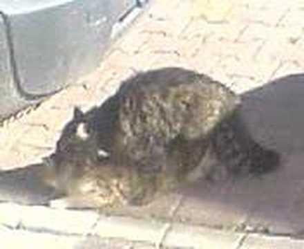 Mart ayı kedilerin çiftleşme ayıdır