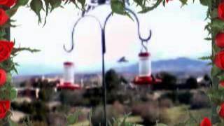 Smashing Pumpkins -porcelina of the vast oceans hummingbirds