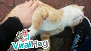 Cat Loves Attention || ViralHog