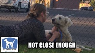 MIRA - Good Samaritan comes SO CLOSE to rescuing this beautiful white dog!
