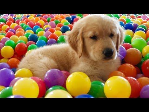 En SEVİLEN 10 Köpeğin YAVRU HALİ