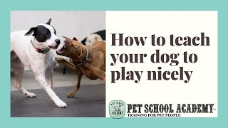 How to teach your dog to play nicely  Pet School Academy