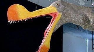 Выставка птерозавров открывается в Нью-Йорке (новости)