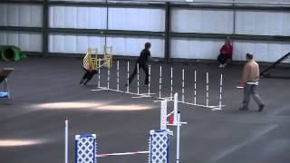 Sophie's Master Standard Run 12/8/2013 Cairn Terrier Trial Denver