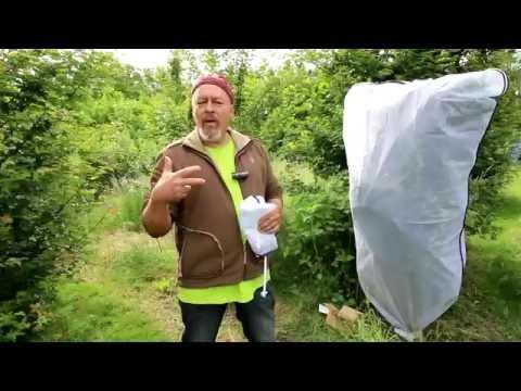 The Eri Silk moth - Part 1 - The big white net around the bush